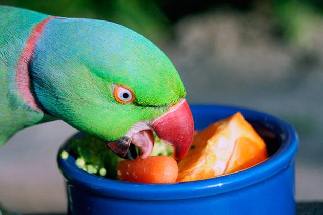 Ожереловые попугаи очень любят свежие овощи и фрукты