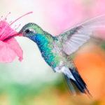 Колибри – самая маленькая птица