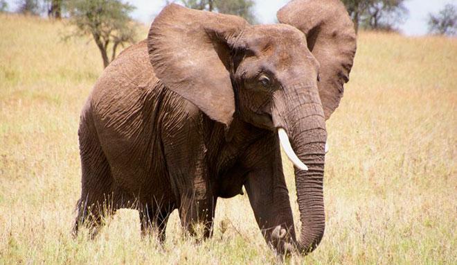 Сколько лет живут слоны