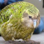 Самые большие попугаи