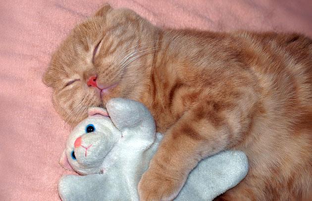 Учеными доказано, что кошки видят сны