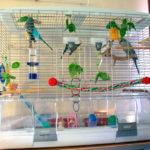 Клетка для волнистого попугая