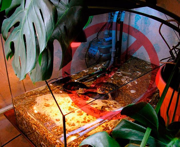 Недостаточный объем воды в аквариуме, может пагубно сказаться на здоровье красноухой черепахи