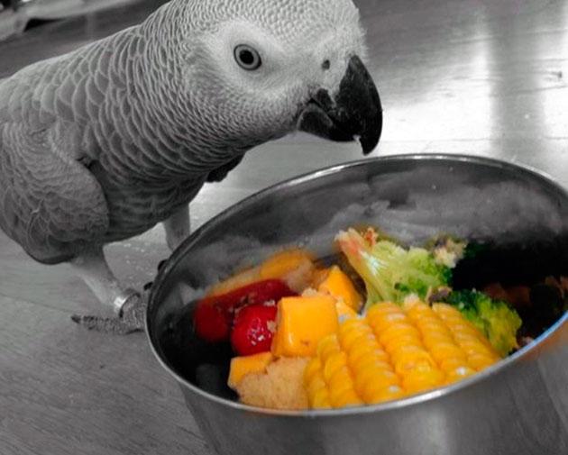 Фрукты и зелень нельзя исключать из рациона попугая