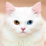 Как назвать котенка белого цвета