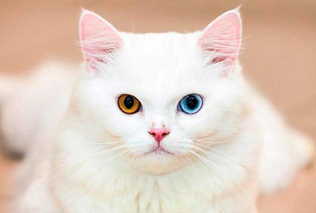 Оптимальнее всего для котенка девочки белого цвета подойдут клички где присутствуют мягкие согласные звуки
