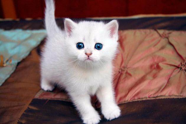 Для котенка мальчика подойдут мужественные клички где присутствуют твердые согласные звуки