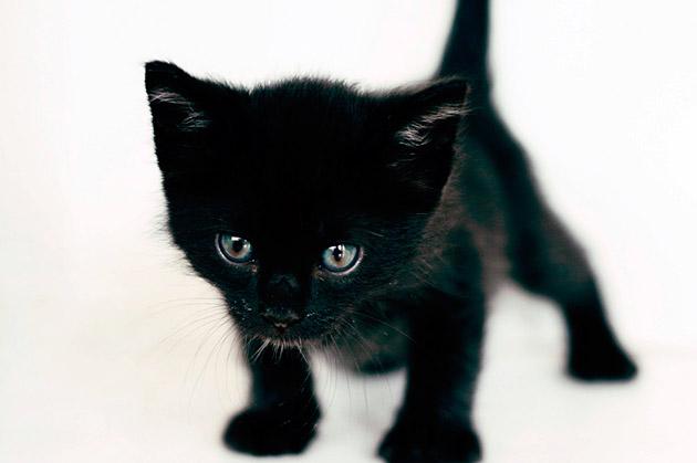 Как назвать котенка черного цвета