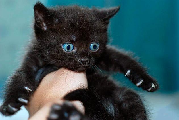 Прозвище для вашего черного котенка может ограничиваться, только вашей фантазией
