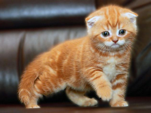 Как ласково назвать кота
