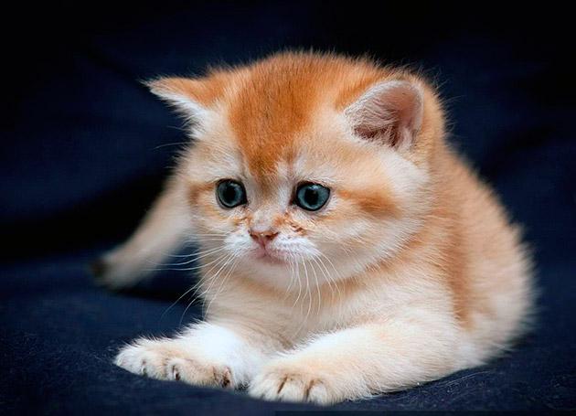 Какое имя дать рыжему коту