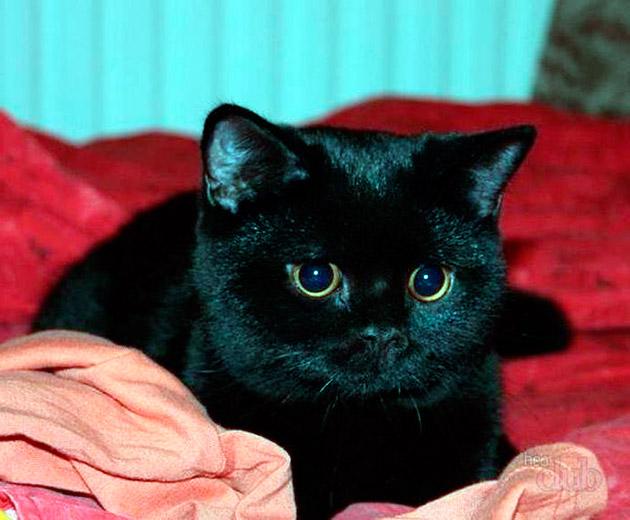 Бытует правила, что не следует называть котенка труднопроизносимыми именами