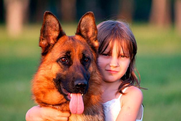 Какие породы собак лучше подходят детям