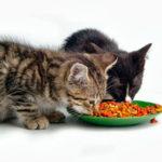 Можно ли кошкам сухой корм