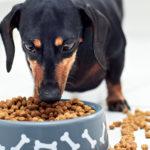 Корм эконом класса для собак