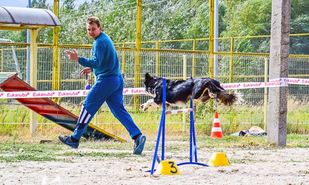 Подготовка вашей собаке к аджилити - это планомерная, кропотливая работа