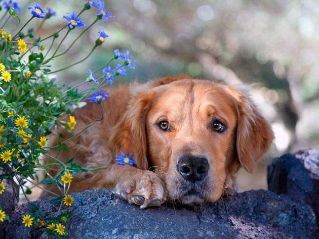 Существует множество средств защиты собаки от клещей, начиная от ошейников, заканчивая вакцинацией