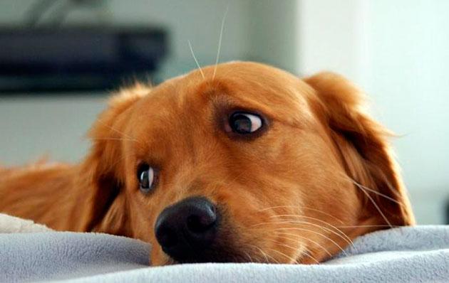 Последствия употребления костей непригодных для рациона собаки весьма печальны