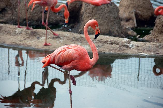 Многие птицы также могут спать стоя - фламинго, аисты, цапли