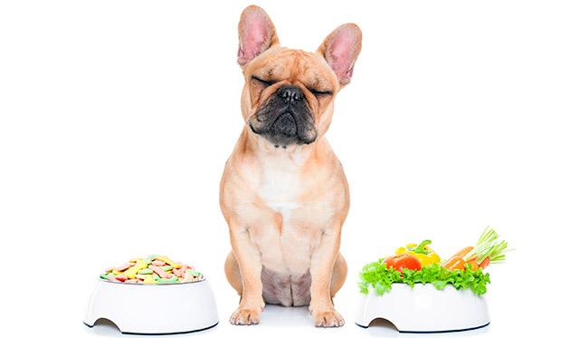 Пожилым собакам желательно давать сбалансированные корма, которые не вызывают аллергию