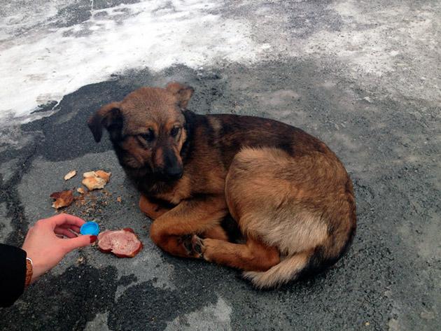 Одним из признаком бешенства у собаки, является отказ от воды и пищи