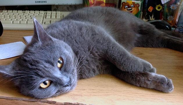 Удаление клеща у кошки не гарант безопасности её здоровья, следите за самочувствием питомца