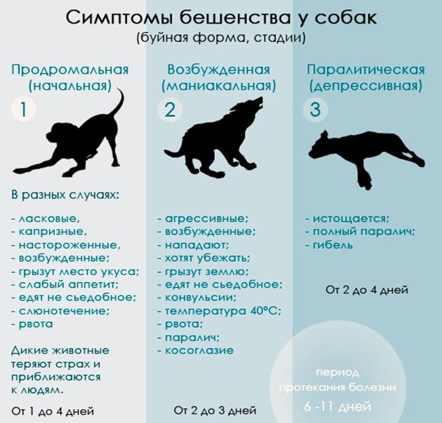 Сколько действует прививка от бешенства у собак