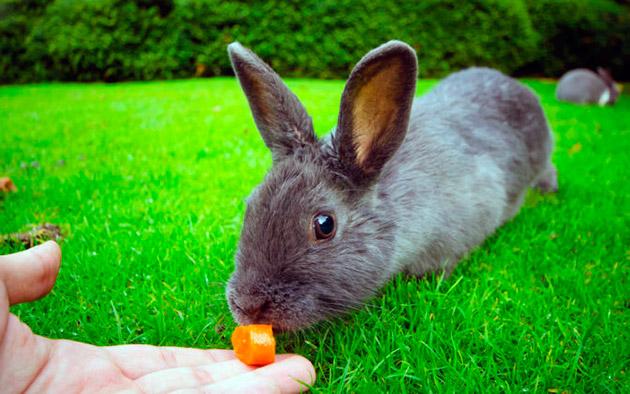 Летом необходимо кормить кроликов большим количеством зеленных кормов