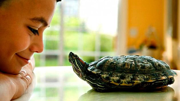 Как правило самочек черепах называют мягкими и нежными именами