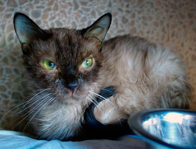 Симптомы чумки у кошки дыхание с открытым ртом, частый сухой кашель