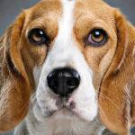 Почему у собак мокрый нос