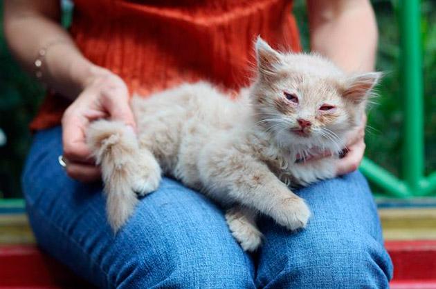 После лечения кошки от чумки, как правило до конца жизни нужно соблюдать рекомендация ветеринара