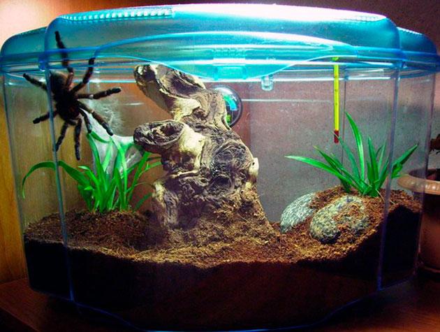 террариум для пауков должен быть максимально защищенным и герметичным, что бы ваш питомец без спроса не смог вылезти