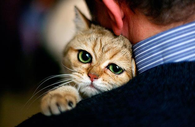 Что бы продлить жизнь вашей кошке, необходимо: следить за её питанием, регулярно посещать ветеринара и наблюдать за поведением своего питомца