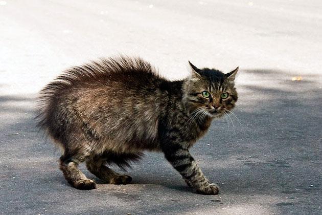 Тремор зачастую вызван дисбалансом витаминов и минералов в организме у кошки, поэтому тщательно следите за рационом питания