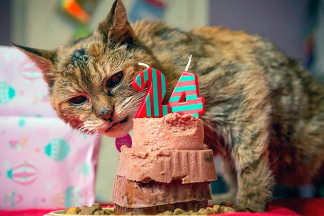 Сколько кошке лет - определяем по человеческим меркам