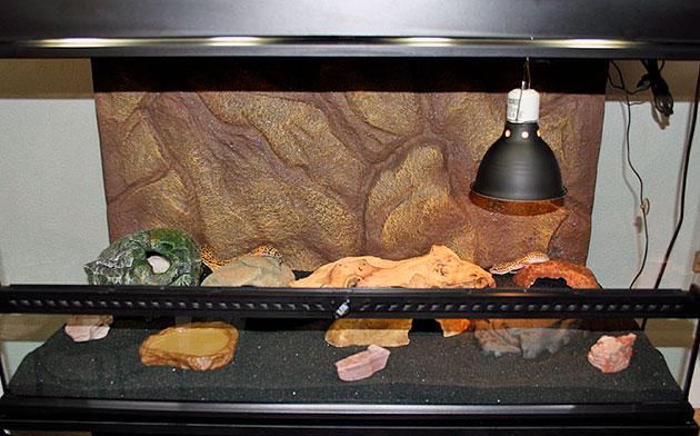 Террариум для пятнистого леопардового эублефapа следует покупать стеклянный, так как пластиковый - он поцарапает когтями