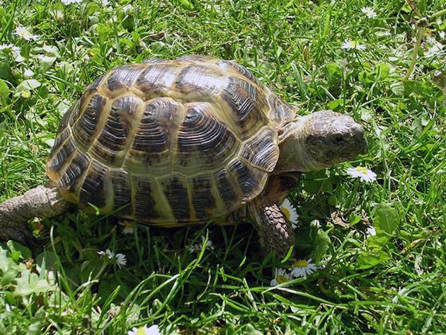 основной ареал обитания можно понять из названия черепахи