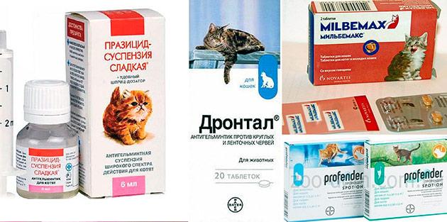 Существует множество глистогонных препаратов, а самые оптимальные из них - суспензии в шприцах