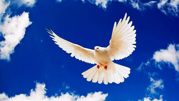Голуби – птицы мира