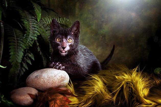 Ликой или кошка-оборотень