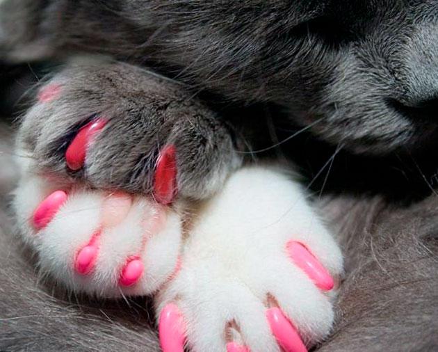 Перед приклеивание колпачков желательно подготовить кошку к этой процедуре - разминая лапки за несколько дней до её проведения