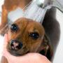Как часто можно мыть собаку