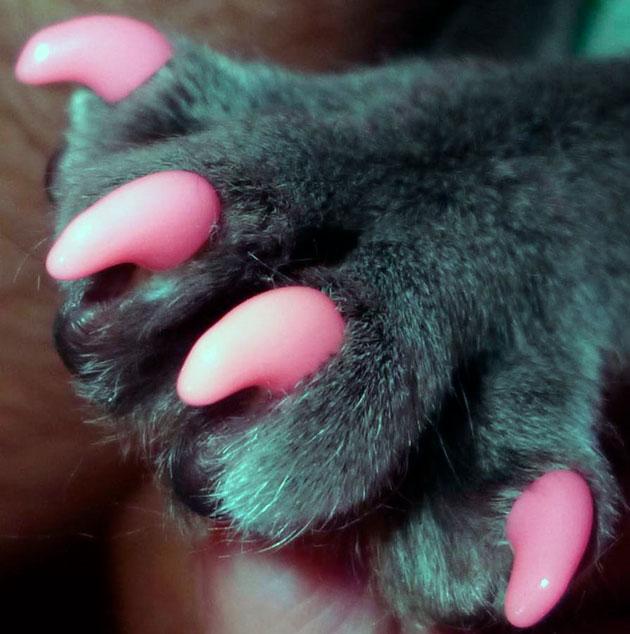 Антицарапки удерживаются на когтях кошки примерно 1.5-2 месяца