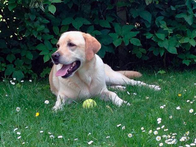 Основным методом профилактики пироплазмоза у собак является каждый осмотр после прогулки летом