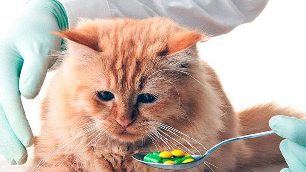 Существует большое количество гилстогонных средств для кошек, которые необходимо принимать перед вакцинацией