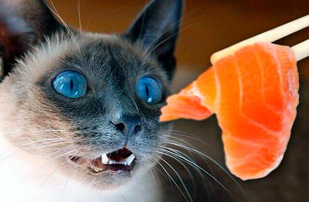 Таурин, который необходим кошкам, так же находиться в морепродуктах