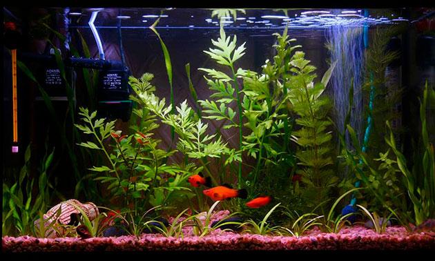 Аквариум до 50 литров оптимальный вариант для создания подводного мира