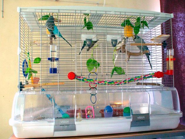 Клетка для попугаев должна не стеснять движения питомца, иначе это чревато проблемами со здоровьем