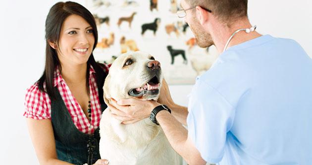 Регулярные осмотры у ветеринара - отличный метод профилактики подкожного клеща